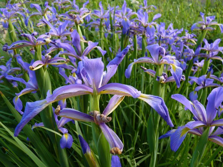 Flowers * Crugny