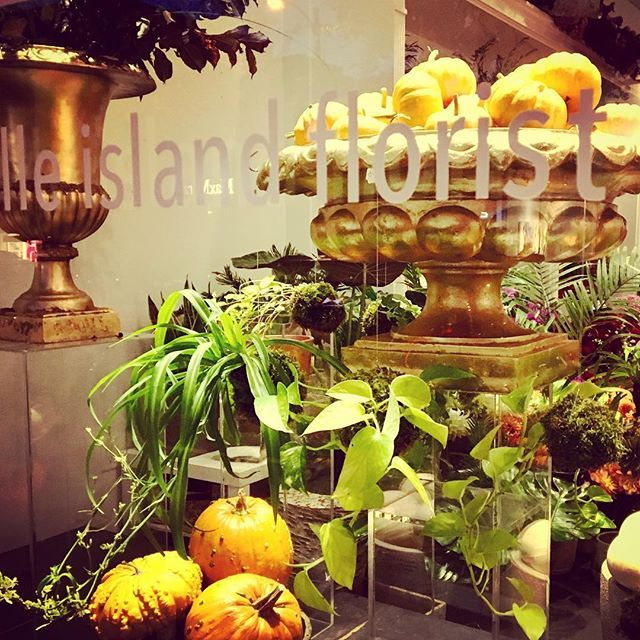 South Granville kokedama! My week's work, including the weigela in the top left. #shamelessselfpromotion  #mossballs @gifvancouver #plants #southgranville #pumpkins #vancouver #display #shopfront #gold #hangingplants #hanginggarden #windowdisplay #window @southgranville @mysouthgranville