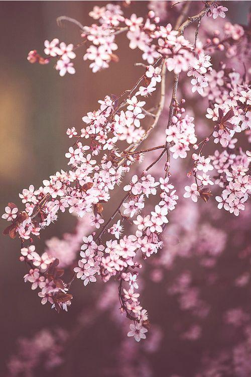 umq:  Spring {Viktor Wink}
