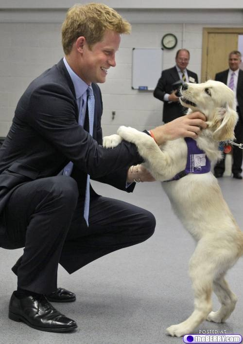 Well if anyone needed another reason why Prince Harry is hot...here he is with an adorable puppy.