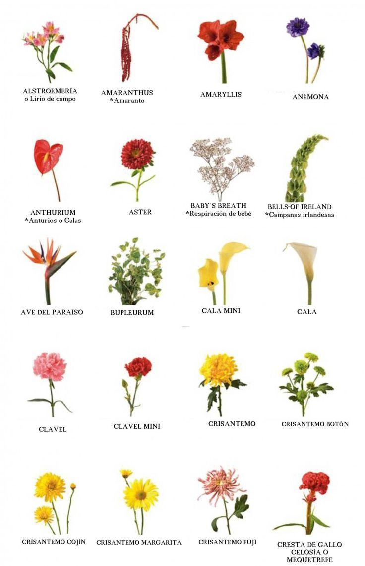 m s de 25 ideas incre bles sobre nombres de flores en