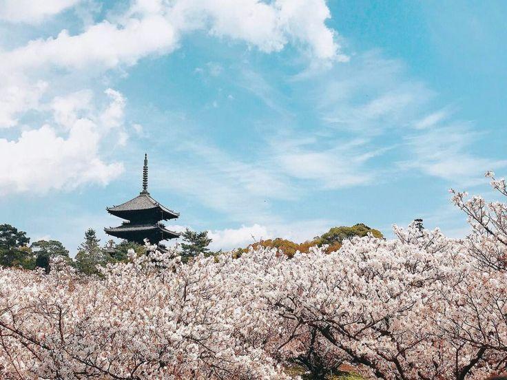 Ninna-ji Temple, Kyoto, Japan, World Heritage, 仁和寺, 京都, 日本, 世界遺産