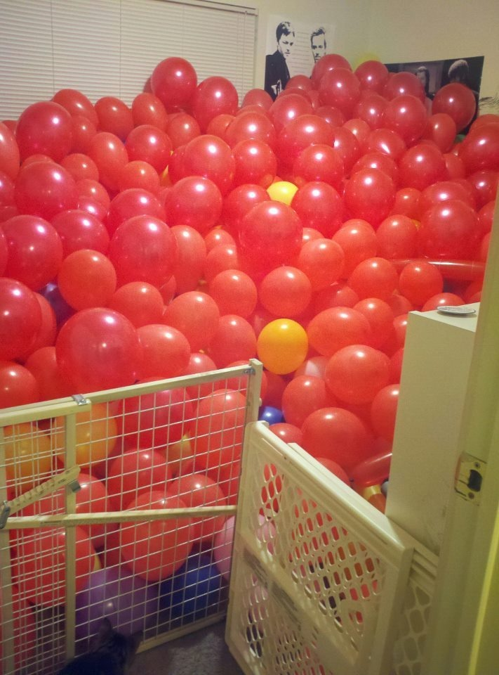 I Went Out Of Town This Week And Came Home To 987 Of These In Birthday Pranksbirthday Party