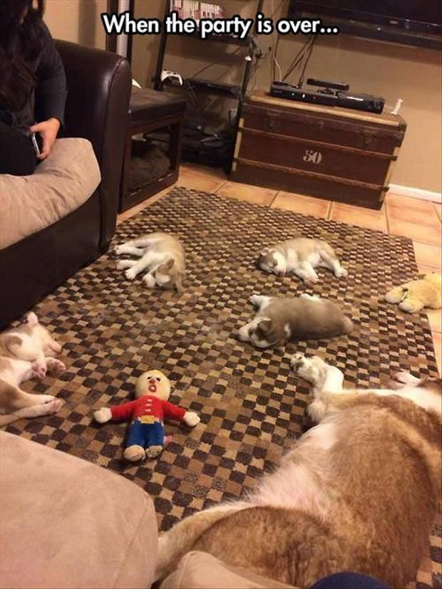 When the party is over... MR bill got a contact high from all the cat nip....Evil!!