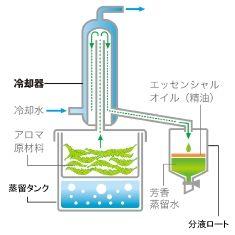 Esquema de destilação de óleos essenciais.