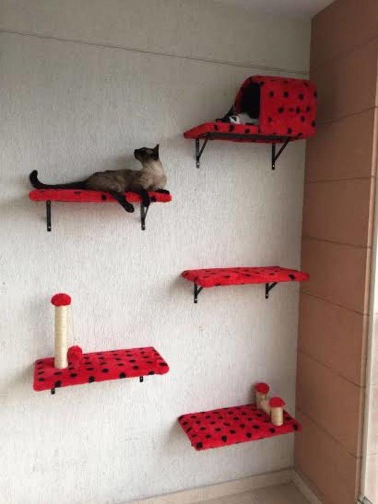 Creado por y para PASIONES por gatos, todo aquí está pensado para el bienestar, …