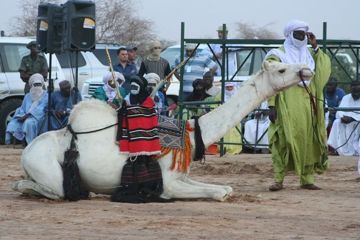 This camel was given to Libya's Gaddafi at a festival in Niger we were both at in 2007