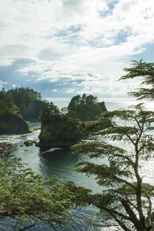 Olympic National Park, Washington I would like to go here and see the whale migration