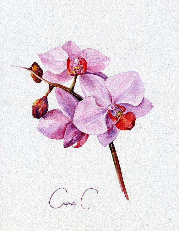картина для распечатки орхидея общей