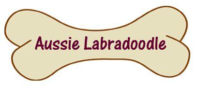 Aussie Labradoodle Puppy Training. Australian Labradoodle breeders of Multigen Australian Labradoodle puppies, Australian Labradoodles, shipping to Ohio, Pennsylvania, Illinois, Indiana, Connecticut, New York, New Jersey, Arizona, California, Florida, Massachusetts, Virginia