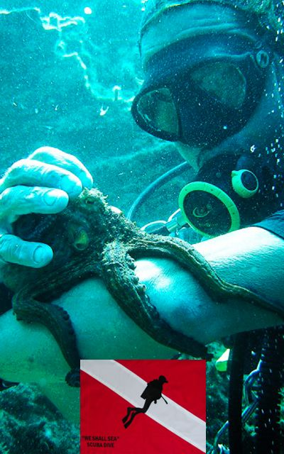 We Shall Sea Dive Center  Chora, Amorgos Island – Cyclades, P.C. 840 08, Greece  - See more at: http://www.dreamingreece.com/activity/we-shall-sea-dive-center  #scubadiving #greece #dreamingreece #amorgos #greekislands