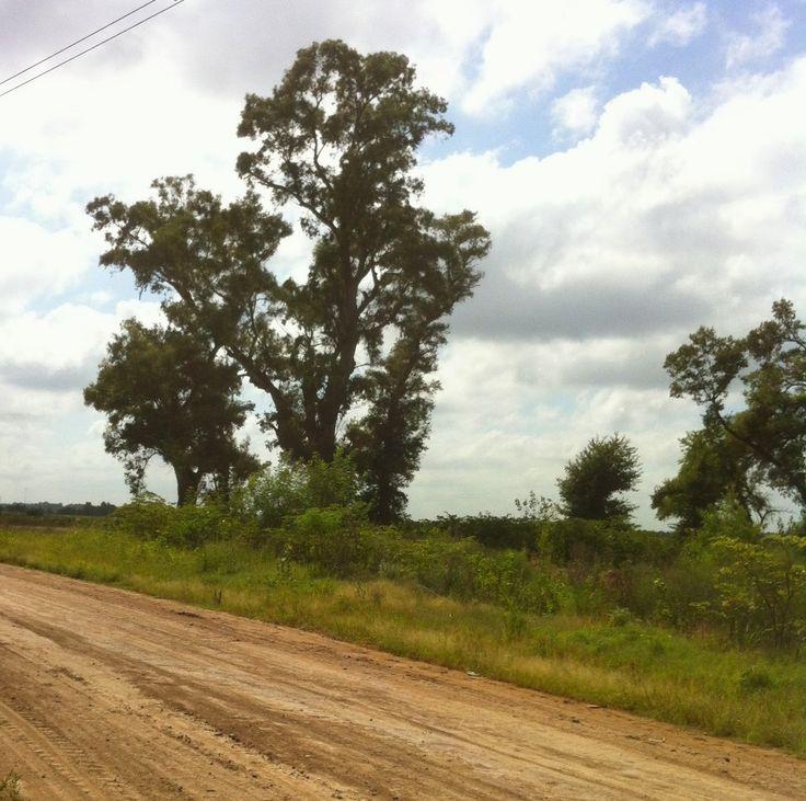 camino rural en el  campo argentino. prov. de buenos aires, argentina