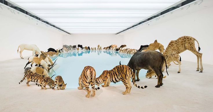 Cai Guo-Qiang: Falling Back to Earth- Queensland Art Gallery   Gallery of Modern Art