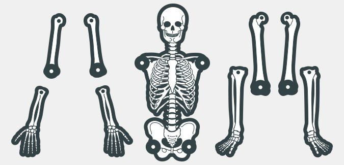 A printable skeleton template in various colours and two sizes. Connect the bones using standard split pins.