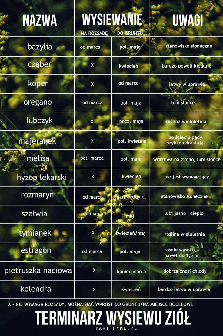 terminarz wysiewu ziół - zioła w ogrodzie #herbs