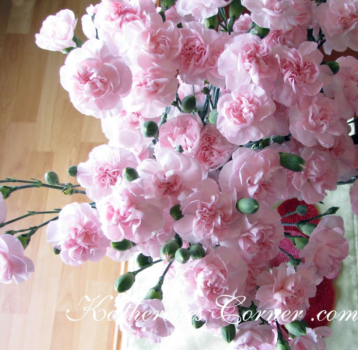 88 best Tears Blossom images on Pinterest | Carnations, Pink ...