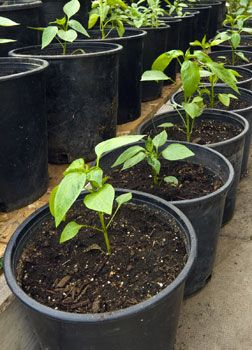 7 Tips for Container Gardening - Urban Farm Online