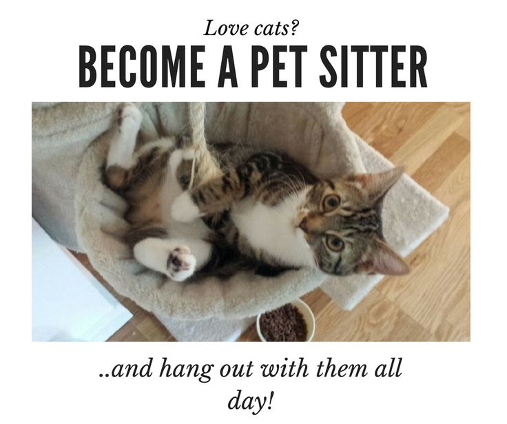 Set up a profile on Trusted House sitters and start your house sitting journey today! How To Be A Pet Sitter| How To Pet Sit|Pet Sitting Tips|Pet Sitting Business|House Sitting Job|House Sitting Checklist