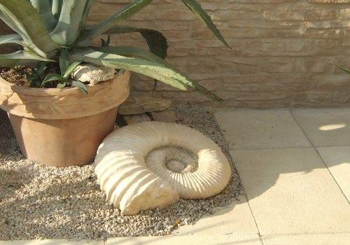 Ammonit: Sonderangebot