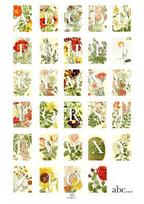 Billede af Plante alfabet plakat
