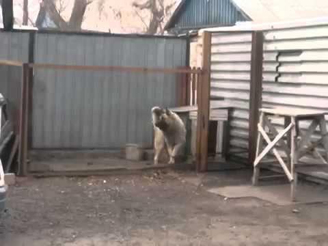 Собака танцует под Modern Talking - YouTube