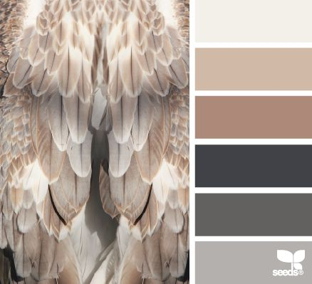 Design Seeds® / for all who ❤ color / feathered tones
