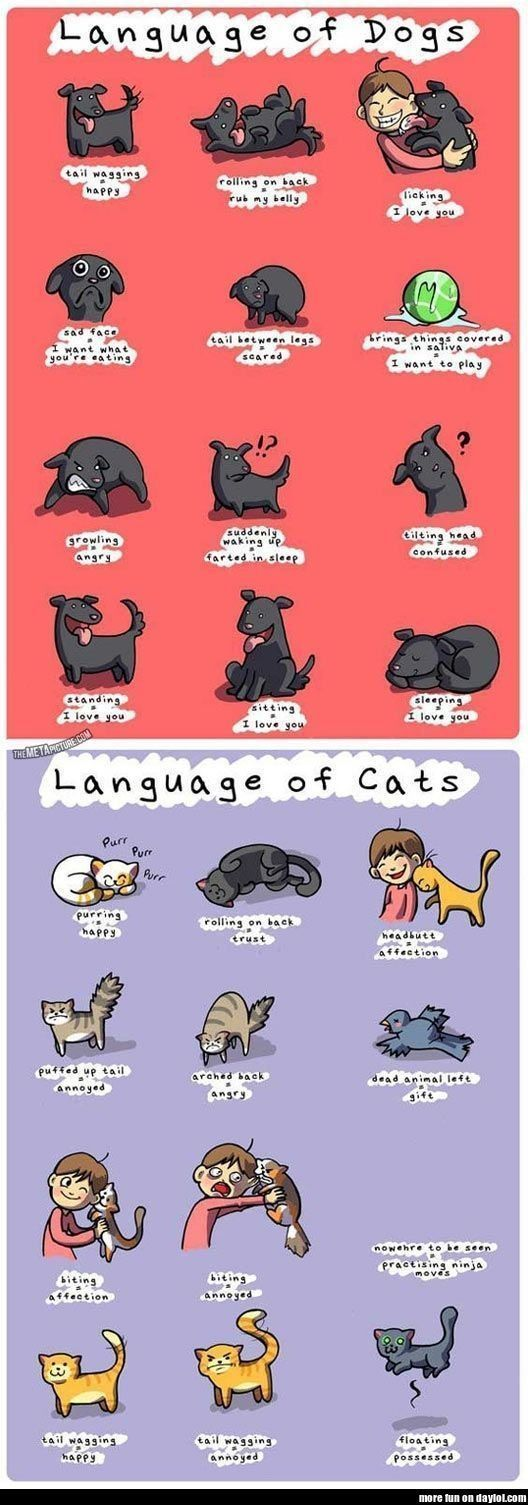 Language of Cats and Dogs. When you speak their language and respect what they're telling you, it results in some pretty amazing communication.