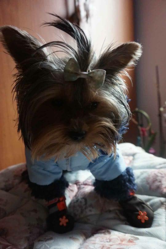 Luna, dragalasa in noua ei tinuta de la King Maru (Salopeta de Iarna & Cizmulite) --> https://kingmaru.ro/  #hainecaini #accesoriicaini #imbracamintecaini #caine #caini #catel #catei #dog #dogs #kingmaru