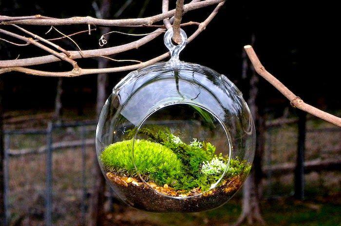 pflanzen terrarium selber machen