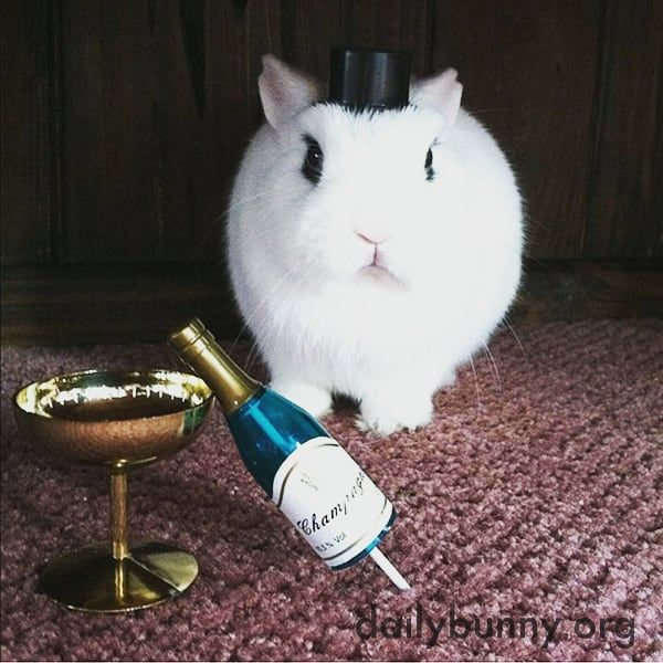 Happy New Years from the Grumpy Bunny! !  Thanks to the dailybunny.org love this pic  #grumpybunny #instagood #instalike #amazing #cool #photography #thebest #rabbitlife #bestfriend #bunnylove #rabbitsofinstagram #bunny #newyear
