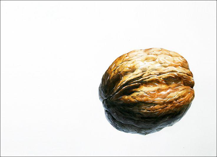 호두 개체 그림