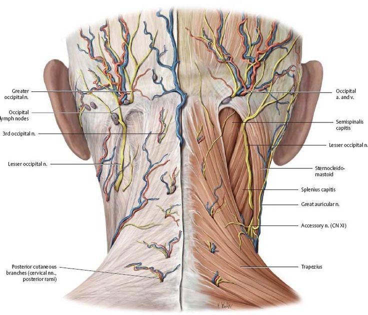 Разгрузка и освобождение затылочной части головы