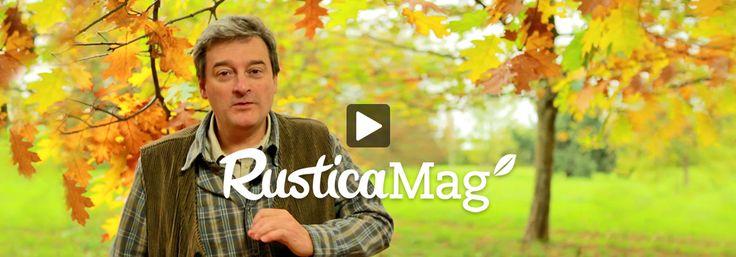 Taille au verger, découverte de variété de pommes de terre ou d'érables du Japon, cuisine gourmande. Le monde du jardin est dans Rusticamag.