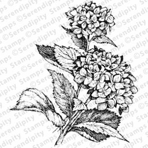Serendipity Stamps Hydrangea Large - bjl