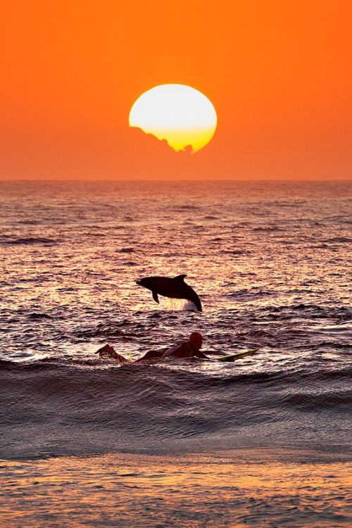 wolverxne:  Dolphin and surfer at sunrise, Bondi Beach Australia | by: [Bondi Rescue]