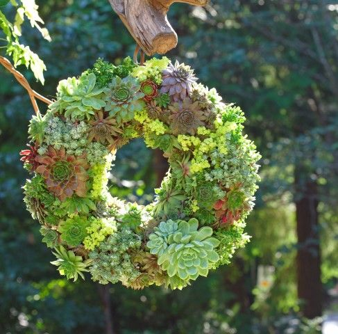 a succulent wreath could be called a little garden by itself