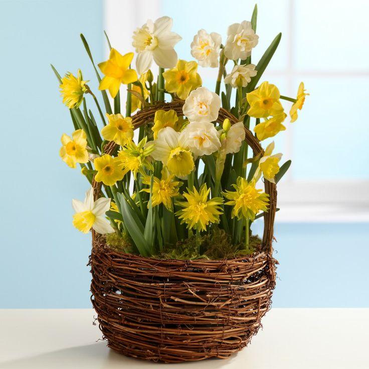 daffodils in flower arrangements | Spring Daffodil Bulb Garden