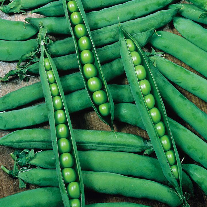 Pea Hurst Greenshaft Seeds