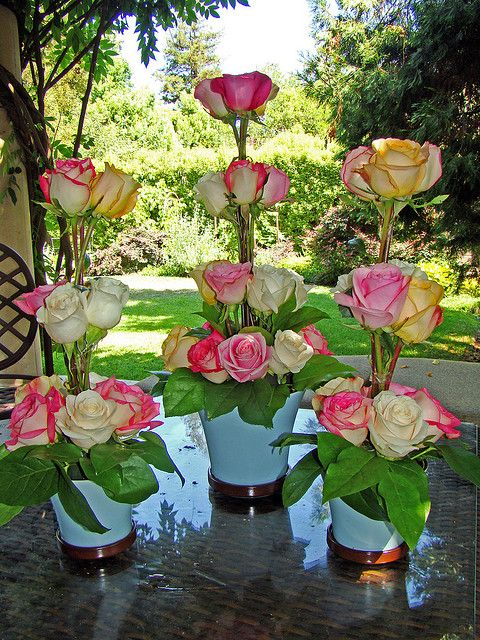 DSC02485 rose topiaries by godutchbaby, via Flickr - Easy and inexpensive