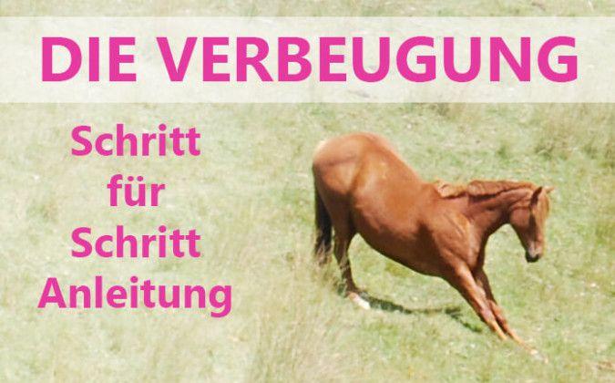 Pferd Verbeugung