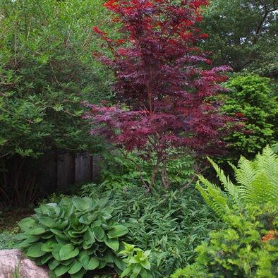 70 Best Images About Acer On Pinterest Gardens Golden