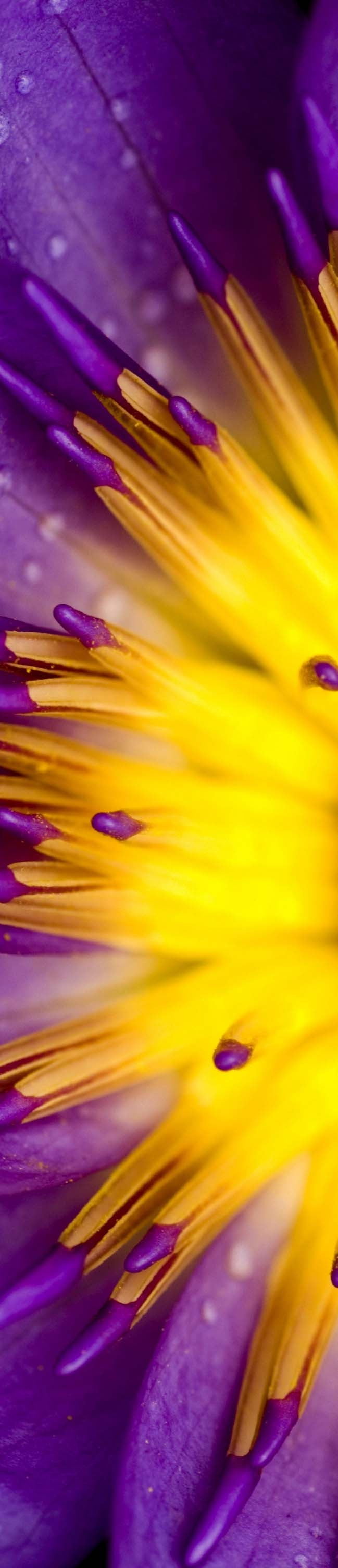 Amazing Purple And Yellow Bloom Colour Scheme