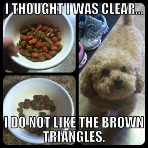 too cute; I have a dog that does the exact same thing!Thoughts, Puppies, Funny Dogs, Triangles, So Funny, Dogfood, Dogs Food, Picky Eaters, Animal