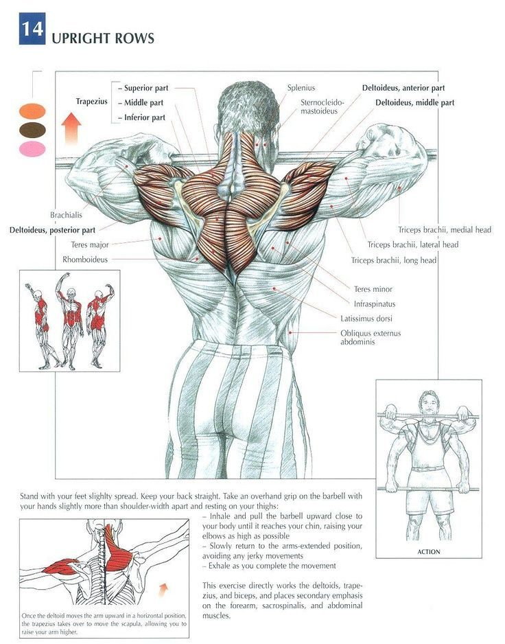 The Anatomy of The Upright Row Workout. The upright row is a weight training exercise performed by holding a grips with the overhand grip and lifting it str