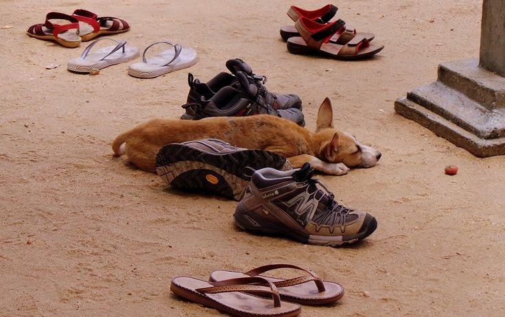 Cani, Gatti, conigli, petauri!Questo articolo non giudica come vengono trattati gli animali, ma solo riportare immagini e impressioni su quello che ho visto.