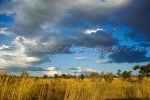 Grassland near Lower Sabie, Kruger Park