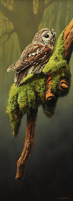 Owl perched on moss covered tree branches that are in the shape of a hand.
