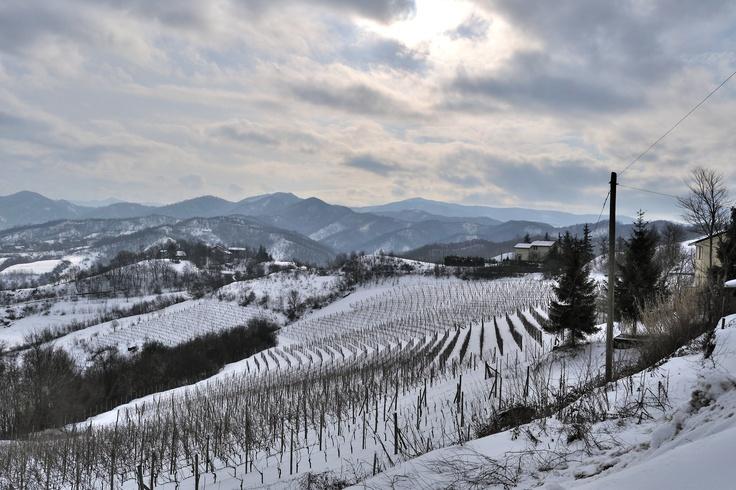 La vigna Storica sotto la neve