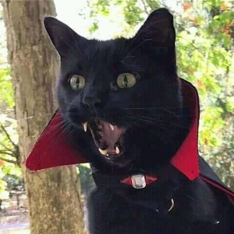 Monkey The Vampire Kitty Instagram Monkandbean Vampire