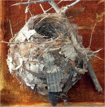 Four new books illuminate the confluence of science, art and ornithology.